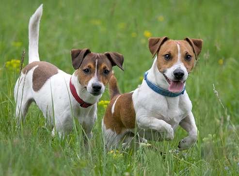 Bivona: raccolta fondi per salvare i cani randagi  Magaze.it